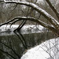 Haltalan fagyos téli napok