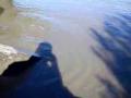 Vízeresztés után beszorult halak a Hortobágyon.