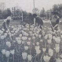 Zöldövezeti fejlesztések Pécsen - 1987. szeptember