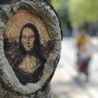 Festmények fák mélyedésein - vidámság az egyetemi campuson Fuzhouban