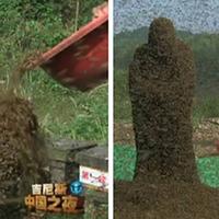 Újabb őrült világrekord Kínából - íme a 62.1 kg-os méh