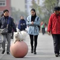 Így sétáltasd a kutyádat