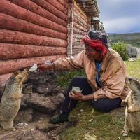 A mormoták jól kijönnek a pásztorokkal