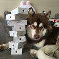 Kína leggazdagabb emberének fia most 8 darab iPhone 7-est vett... a kutyájának!
