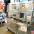 Hongkongban is megjelent a H7N9-es madárinfluenza