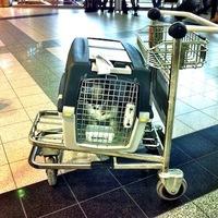 Vegyél Pesten egy kutyát és adj hozzá 11786 km-t...