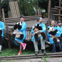 A Backstreet Boys pandákkal