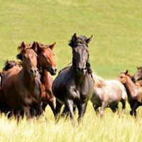 Holnap itt a ló éve - nézegessünk gyönyörű lovasképeket Észak-Kínából