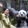 35 éves lett Kína legöregebb pandája