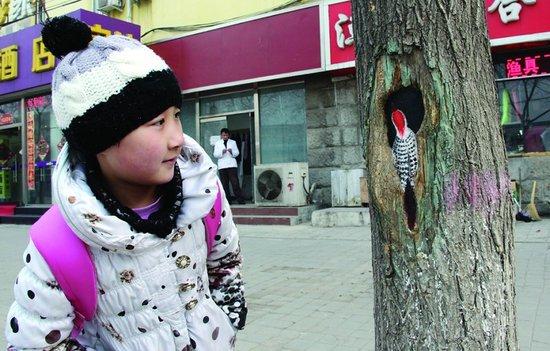 Hollow-tree-paintings-in-Beijing-3.jpg