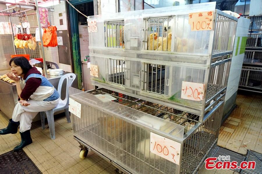 Hongkong-madárinfluenza1.jpg
