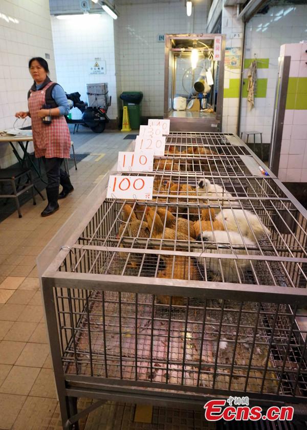 Hongkong-madárinfluenza2.jpg