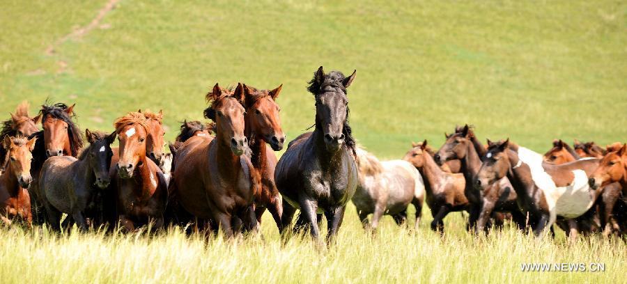lovak-Belső-Mongólia-1.jpg