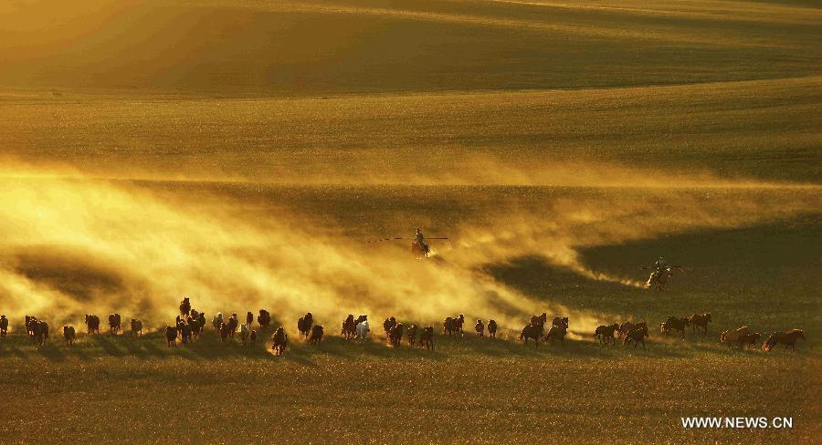 lovak-Belső-Mongólia-10.jpg