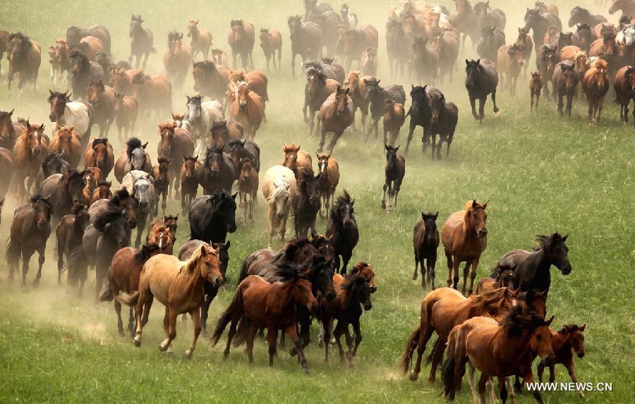 lovak-Belső-Mongólia-3.jpg