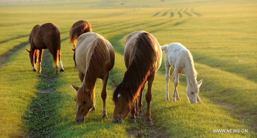 lovak-Belső-Mongólia-4.jpg