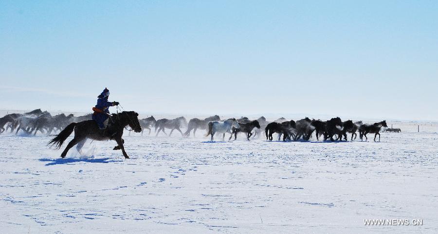 lovak-Belső-Mongólia-6.jpg
