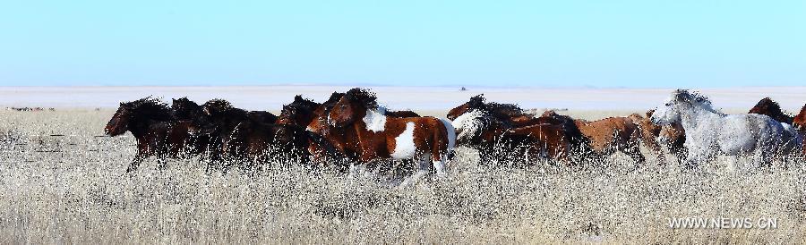 lovak-Belső-Mongólia-7.jpg