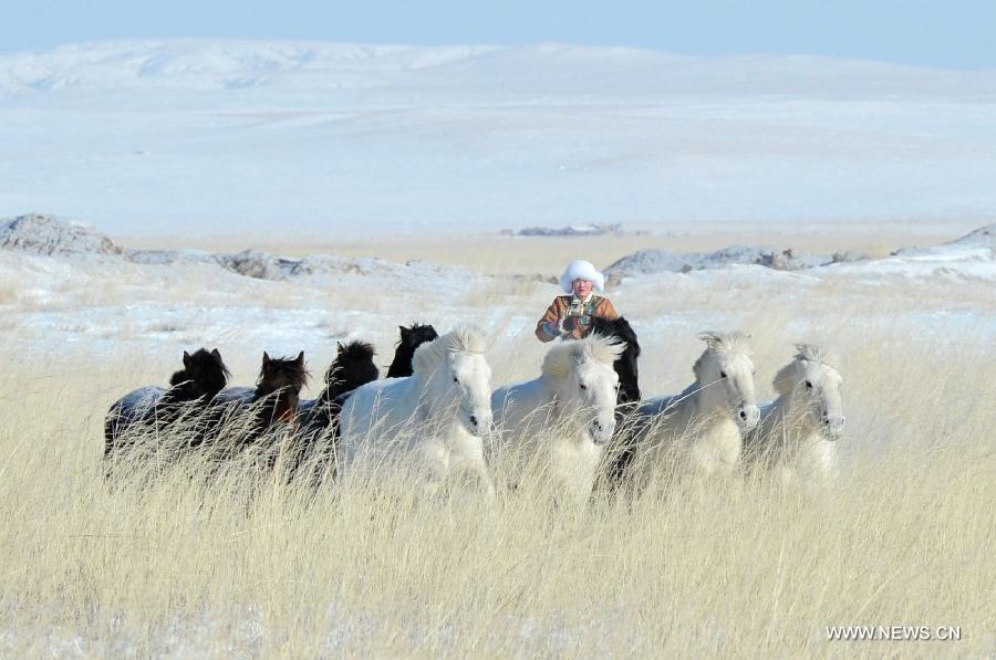 lovak-Belső-Mongólia-8.jpg