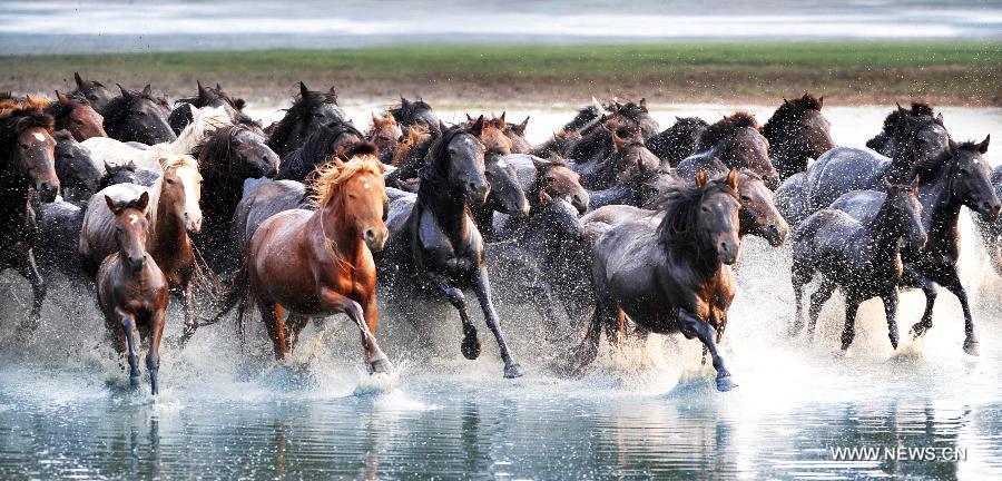 lovak-Belső-Mongólia-9.jpg
