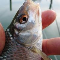 Évzáró horgászat