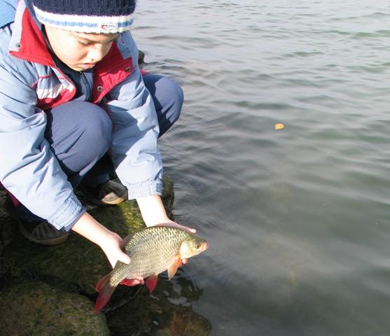 Ez a hal a Balatoné.jpg