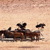 Lüderitzből Sossusvleibe