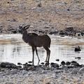 Etosha Nemzeti Park – az első hét oroszlán!