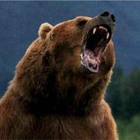 Vigyázz a sarokba szorított medvével!