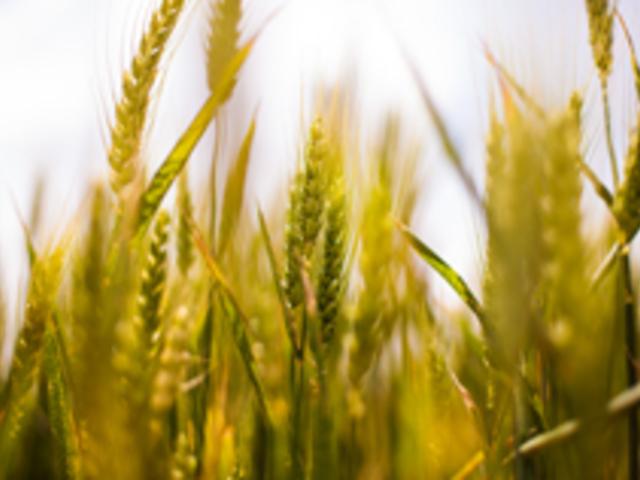 Mezőgazdasági munkakörben foglalkoztat munkavállalót? Adókedvezmény érvényesíthető