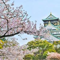 Érdemes tájékozódni - Japán