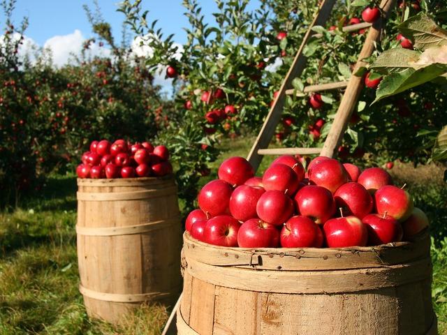 Fellélegezhetnek a mezőgazdasági őstermelők