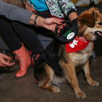 Országossá bővül az elkóborolt kutyák hazajutását segítő mikrochip-leolvasó hálózat