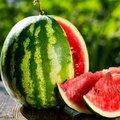 Egyenesen a dinnyeföldről kerül az Auchanba a magyar görögdinnye
