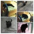 Nagy Zsombor: Az én balatoni macskám, Winston