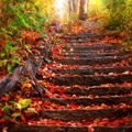 Nagy Zsombor:Jön az őszi szünet!