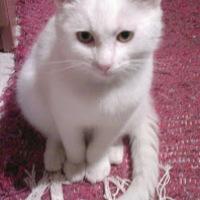 Elveszett cica kerestetik
