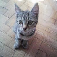 Elveszett cicát keresünk!