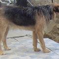 Eltűnt a viharban egy drótszőrű foxi keverék kan kutyus