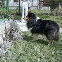 Újabb eltűnt kutya :(