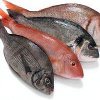 Miért ne együnk mesterségesen tenyésztett halat? (videó)