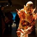 Múmia-anatómia