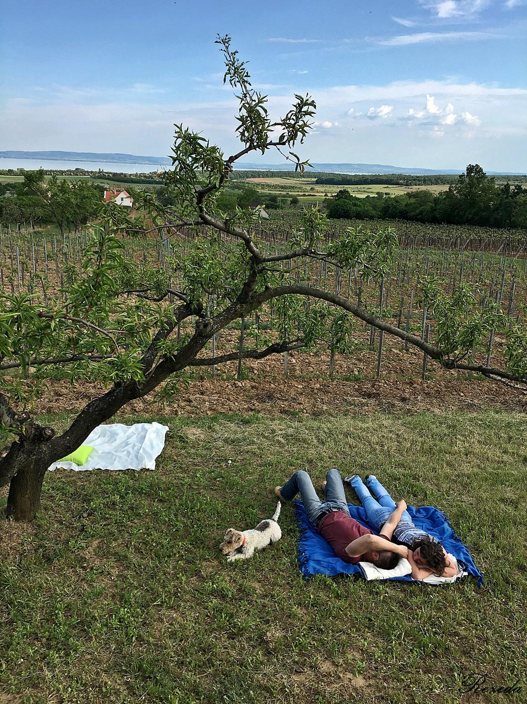 Fűben pihenni jó