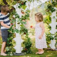SISSI STRAWBERRY: eper termesztése, ha kevés a hely