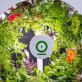 A tökéletes beltéri kertészeti rendszer, amivel akár 90 gyümölcsöt és zöldséget is nevelhetsz egyszerre