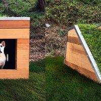 Zöldtetős kutyaház