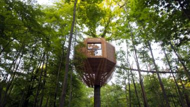 ORIGIN, apró kabin hatalmas fák között