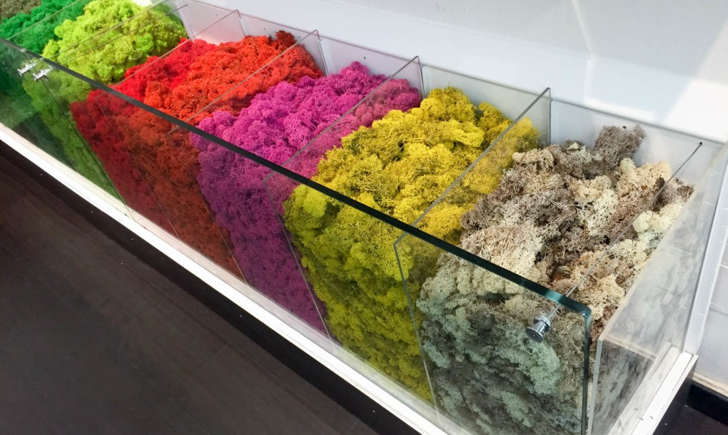 mossmania-colour-moss-bins-1020x610.jpg