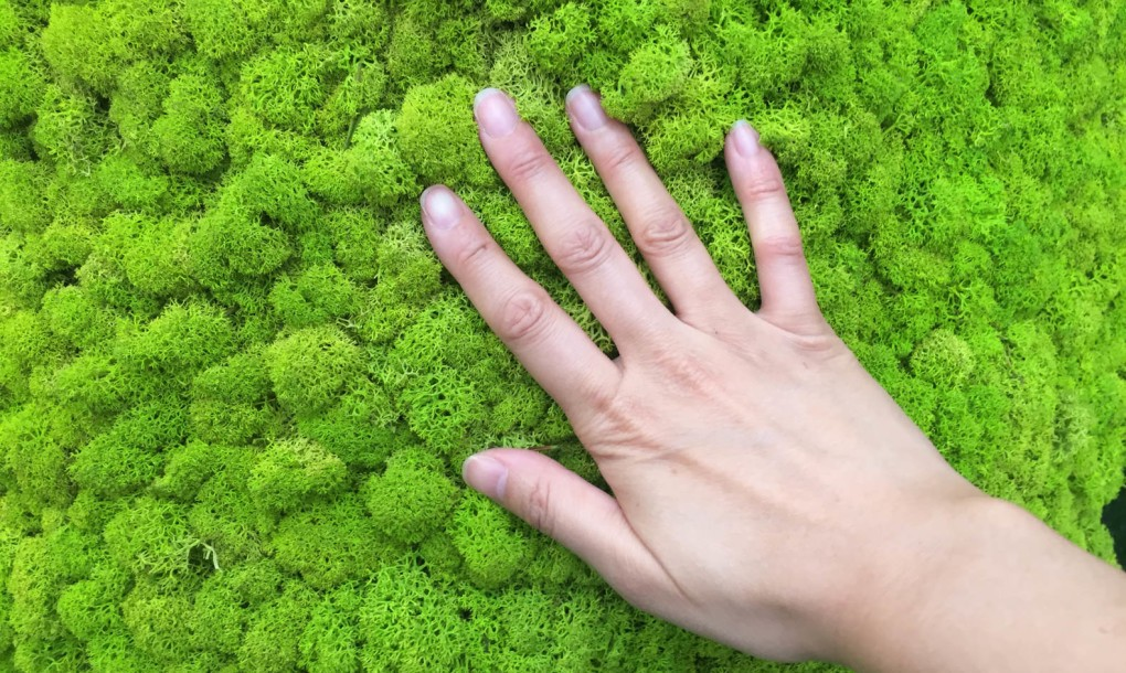mossmania-moss-panel-hand-1020x610.jpg