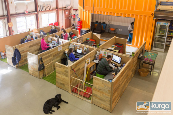 kurgo-dog-supplies-container-office-10-600x400.jpg